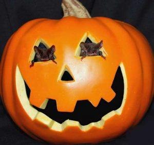 qua-halloween-cho-ban1